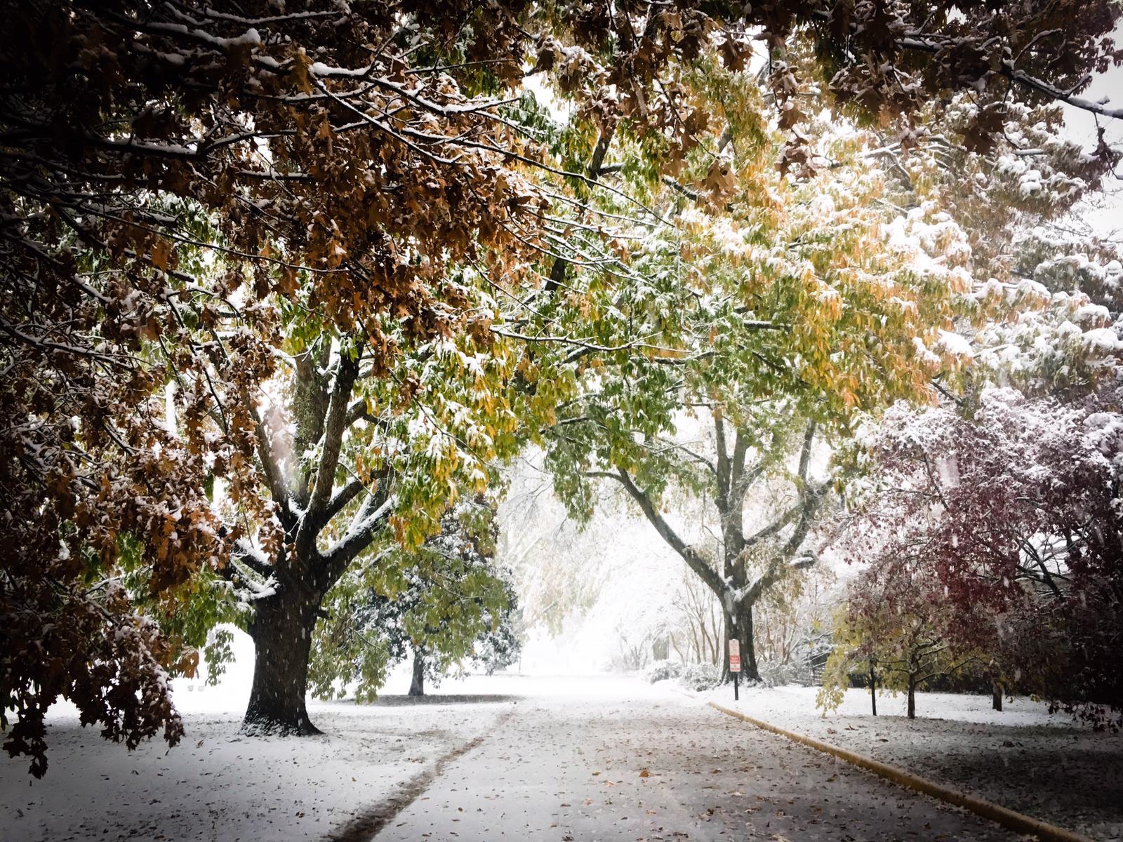 Williamsburg im Schnee